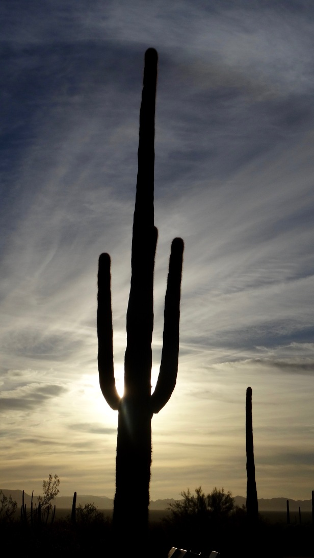 Organ Pipe Cactus National Park - 3.jpg