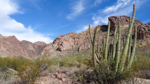 Organ Pipe Cactus National Park - 53.jpg