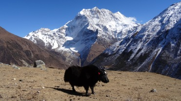Manaslu, Tsum Valley, Nar-Phu, and Annapurna B - 27