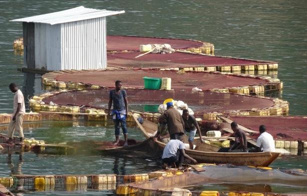 fish-farm.jpg